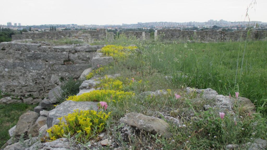 Solona Ruins 9