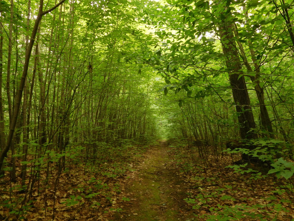 battenkill state forest 3