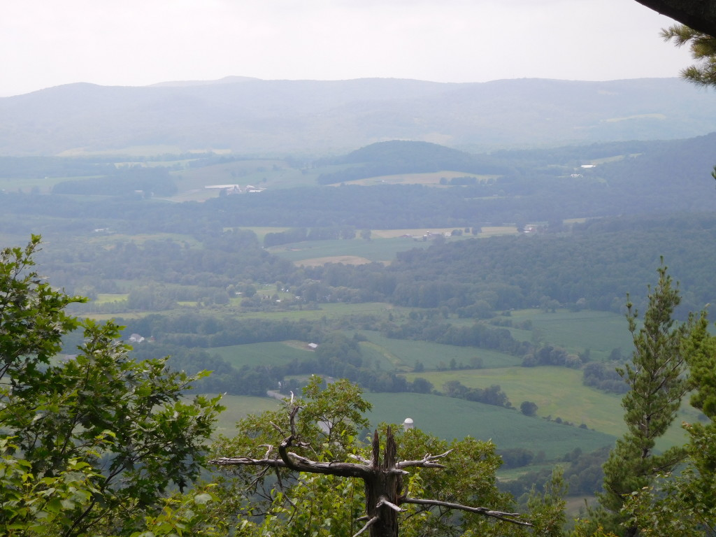 battenkill state forest 5
