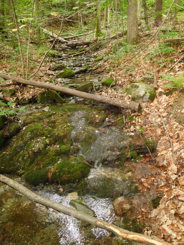 battenkill state forest 6