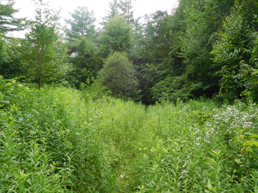 battenkill state forest 7