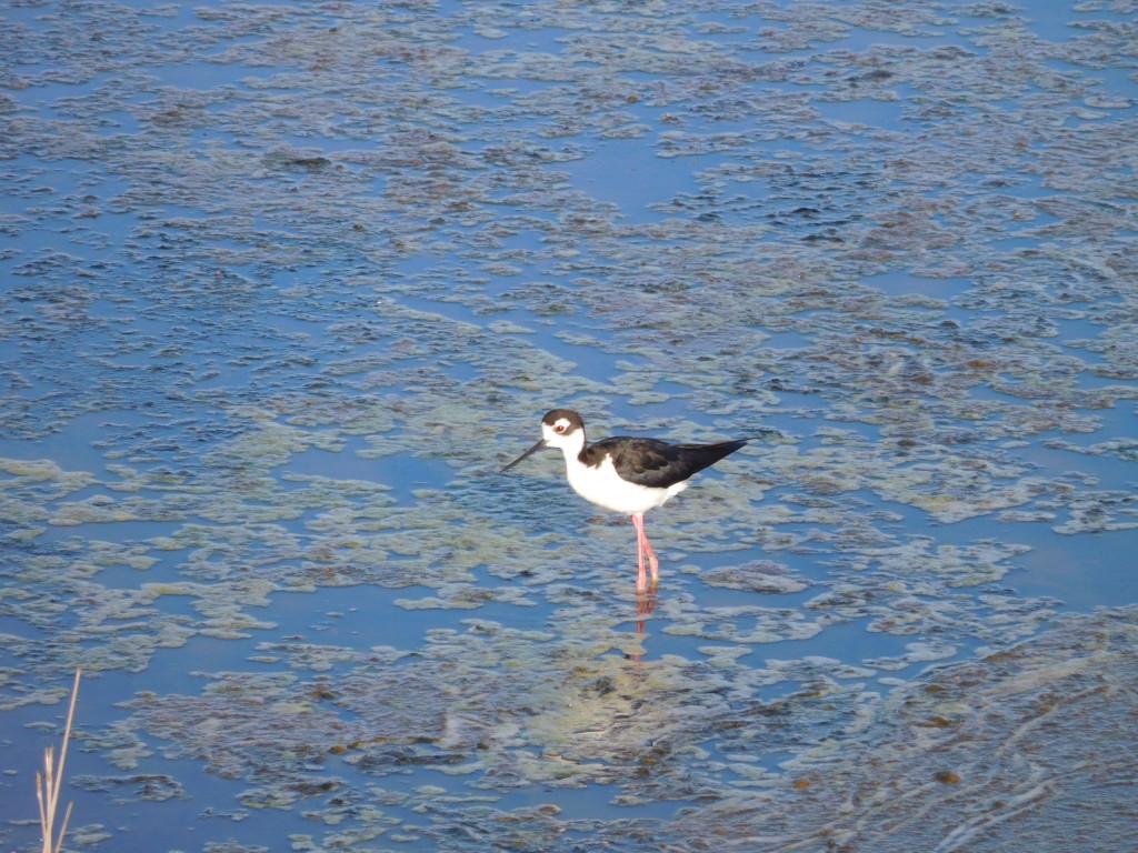Bolsa Chica Ecological Reserve 1