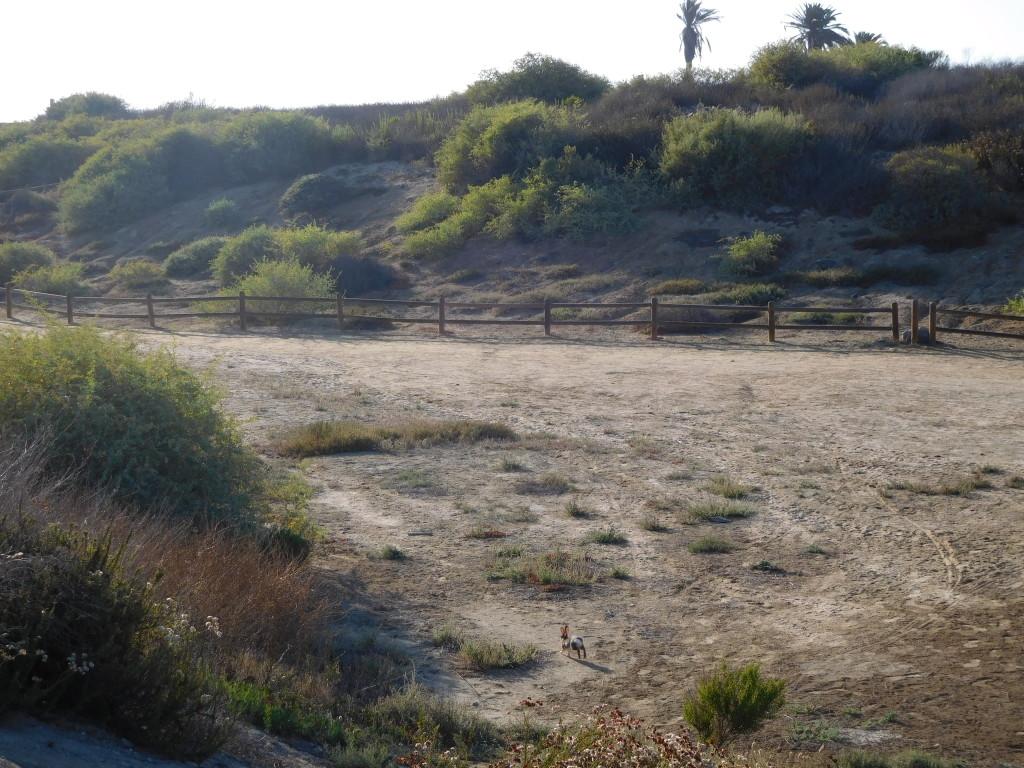 Bolsa Chica Ecological Reserve 5