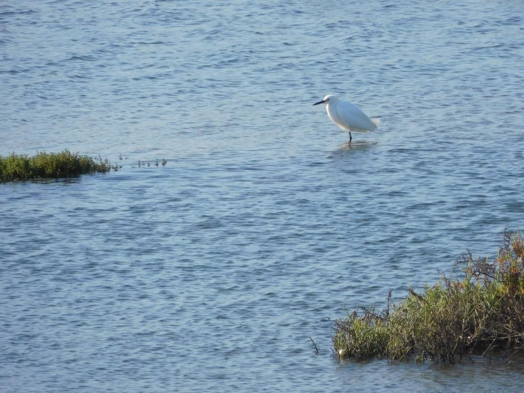 Bolsa Chica Ecological Reserve 8