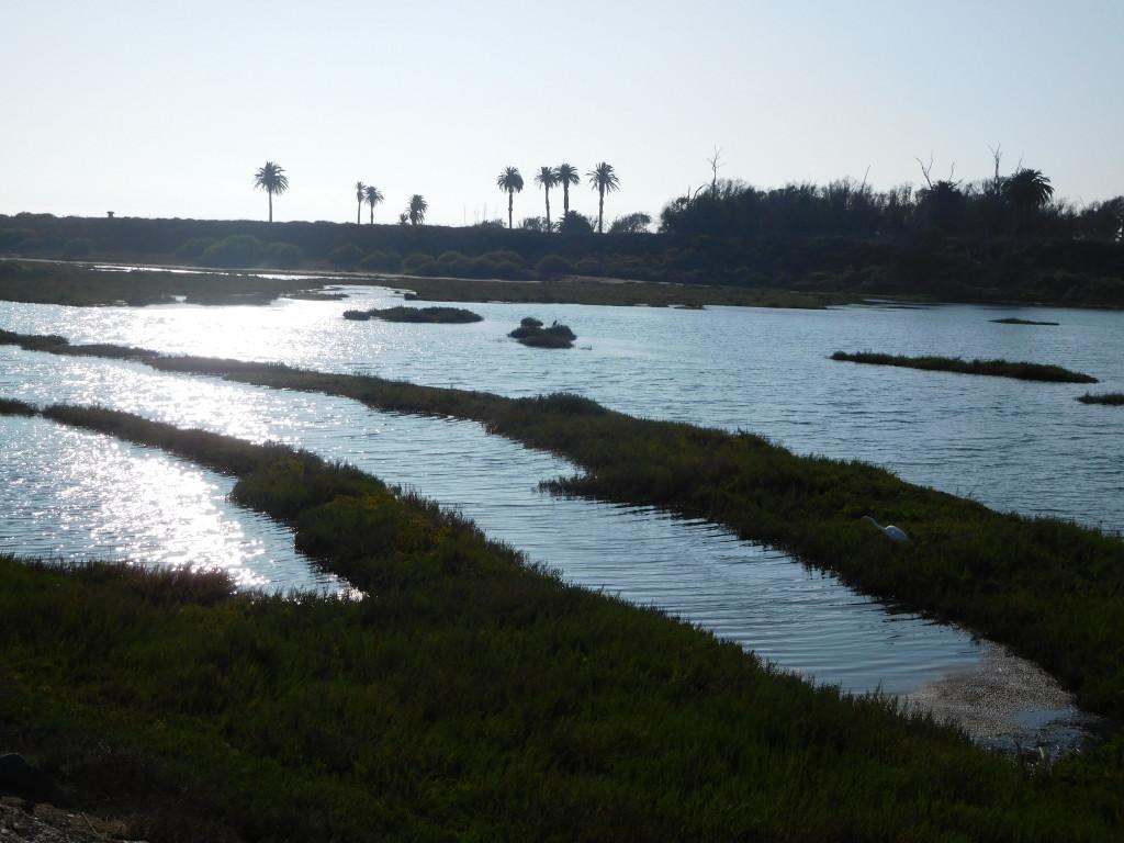 Bolsa Chica Ecological Reserve 9