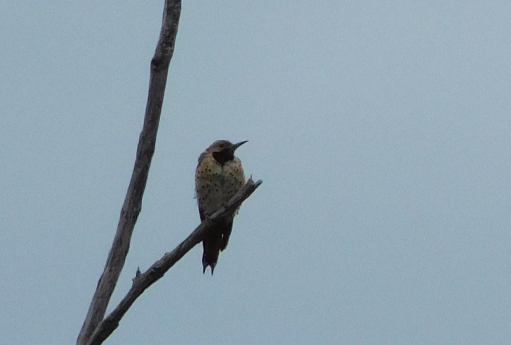 Wellesley Island State Park 4