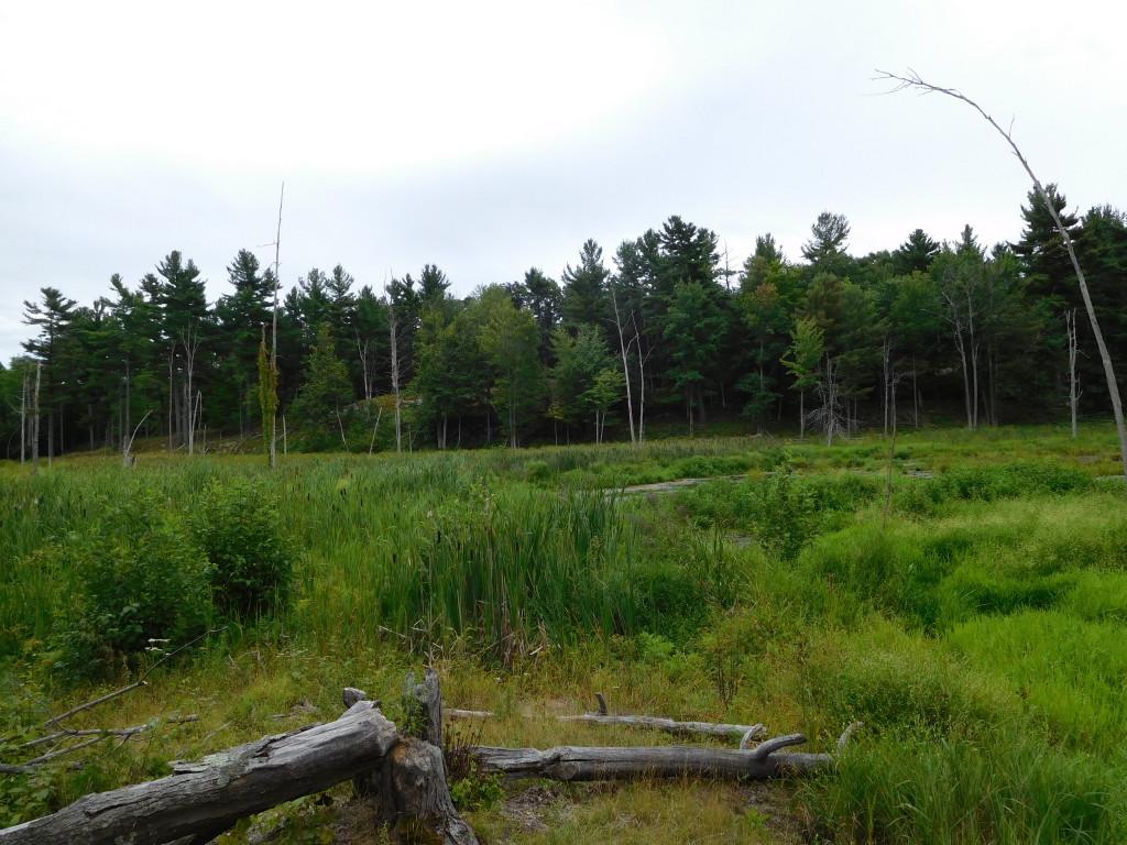 Wellesley Island State Park 8