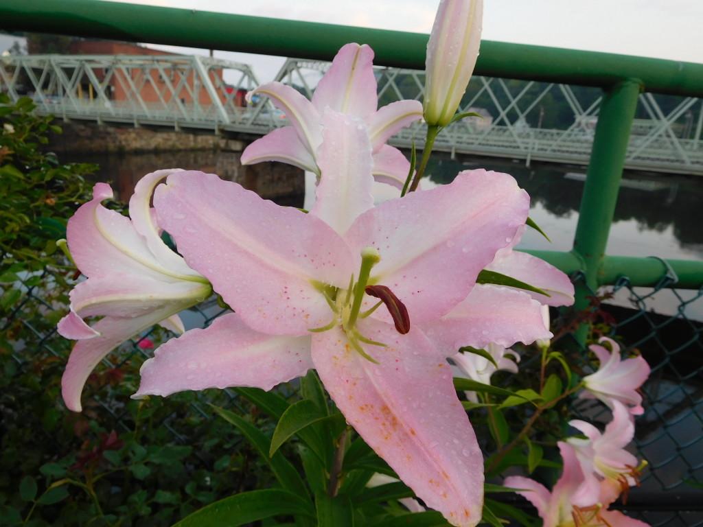 bridge of flowers 3