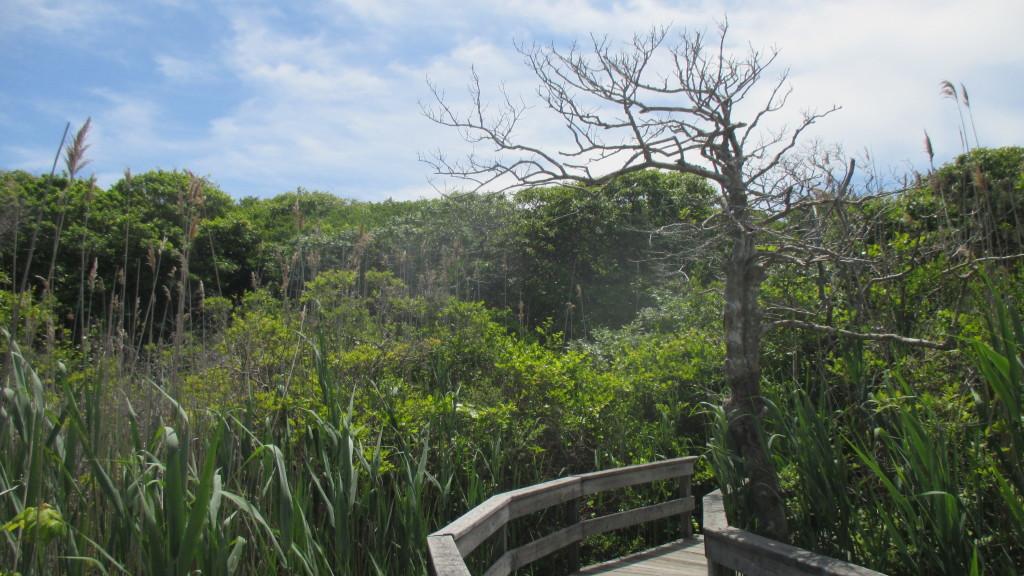 sunken forest 5