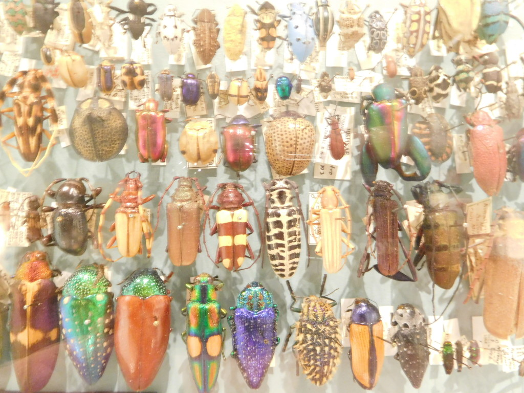 Harvard_Museum_of_Natural_History_1