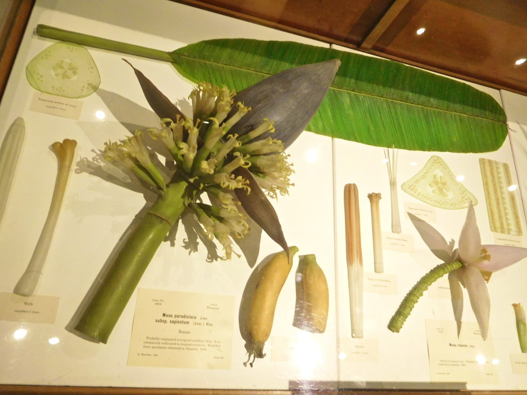 Harvard_Museum_of_Natural_History_2