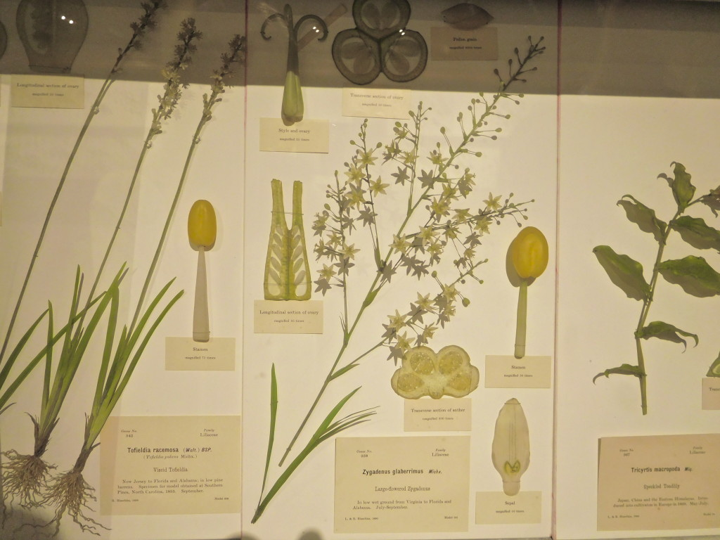 Harvard_Museum_of_Natural_History_4
