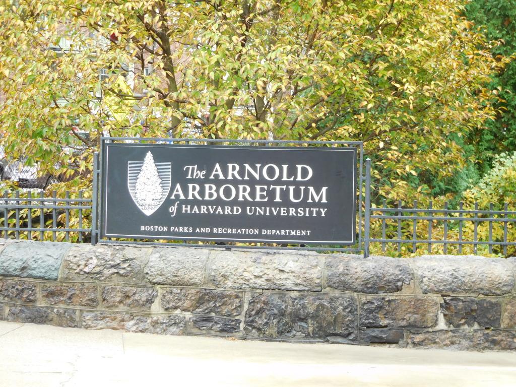 arnold_arboretum_