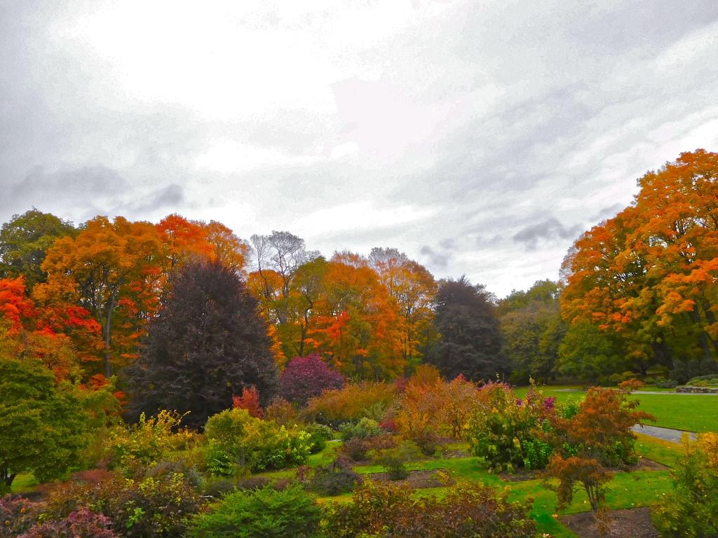 arnold_arboretum_2