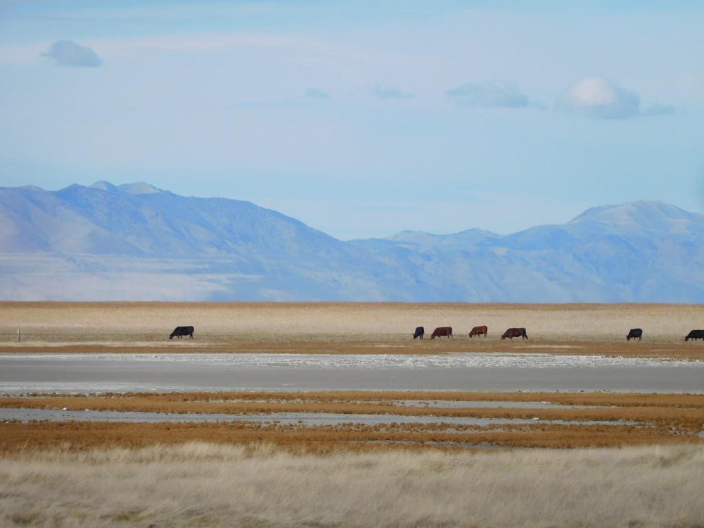 antelope_island_state_park_