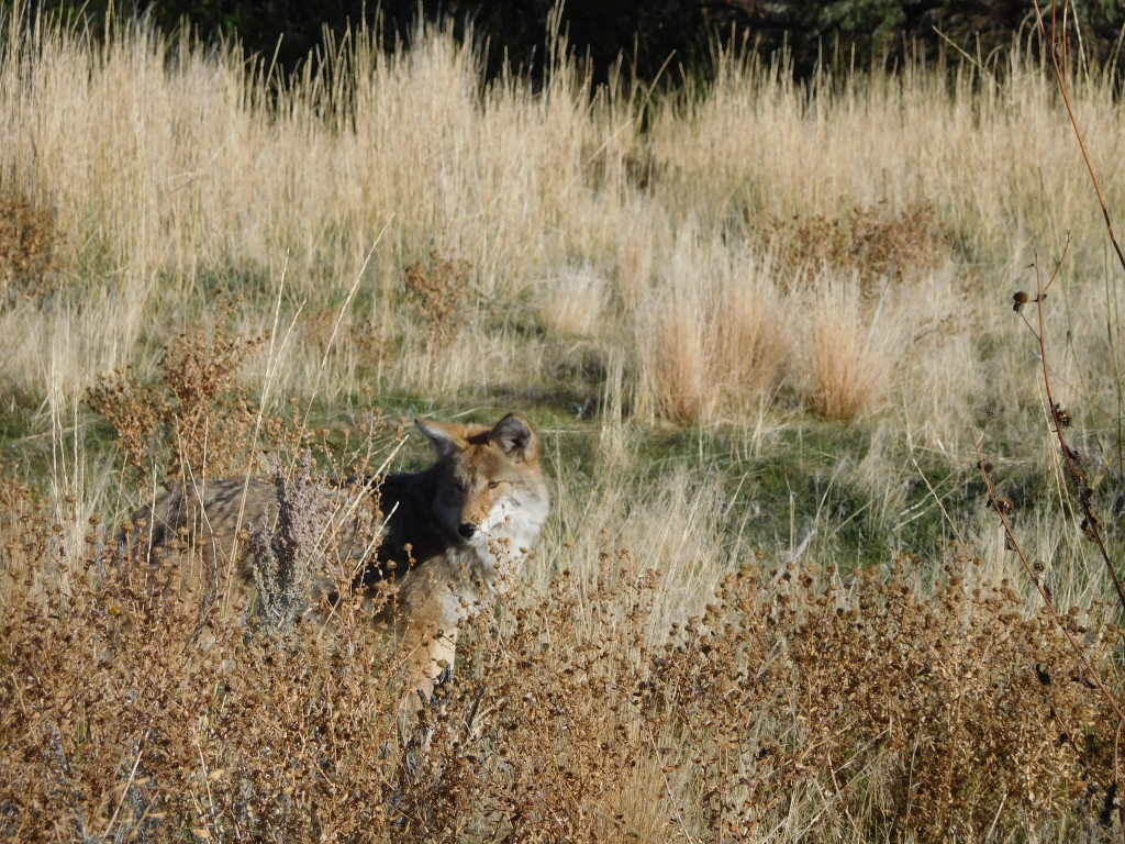 antelope_island_state_park_10