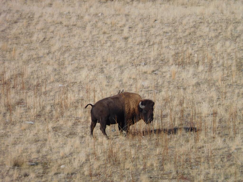 antelope_island_state_park_9