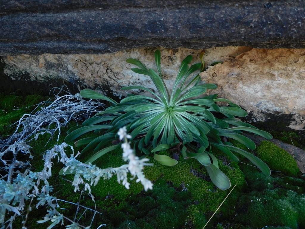 canyonlands_national_park_needles_slick_rock_5