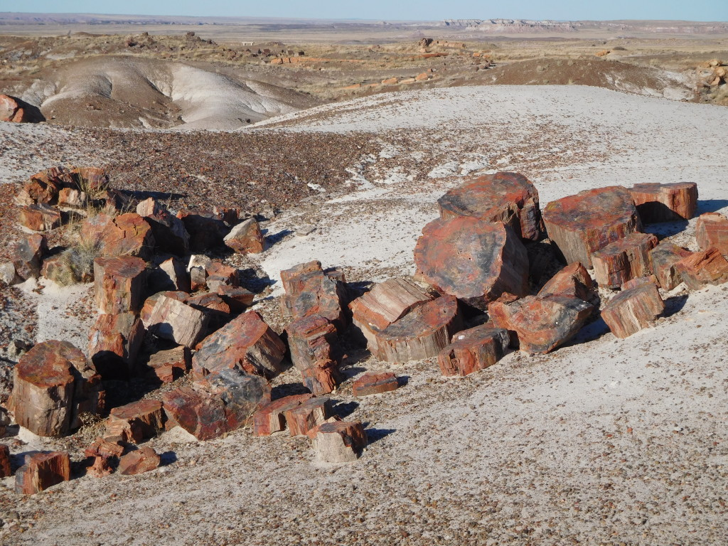 petrified_forest_national_park_crystal_forest_4
