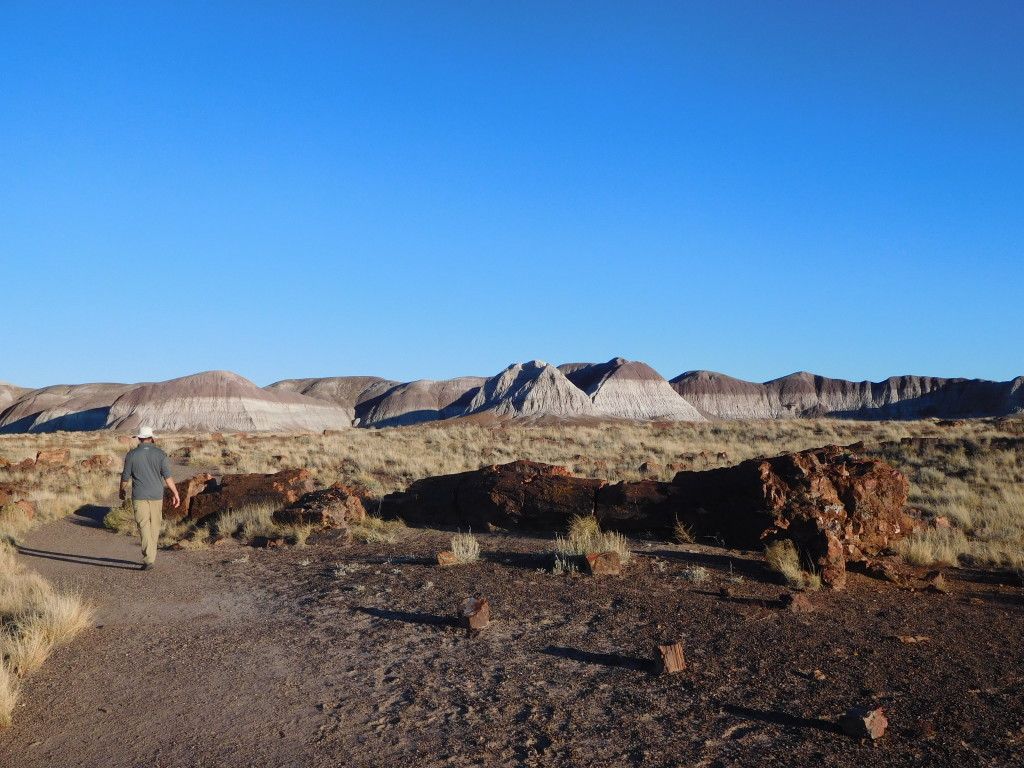 petrified_forest_national_park_long_logs_