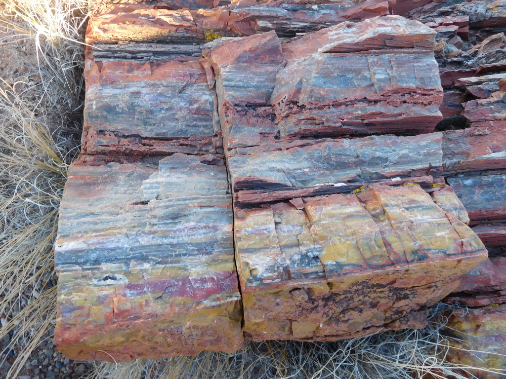 petrified_forest_national_park_long_logs_2