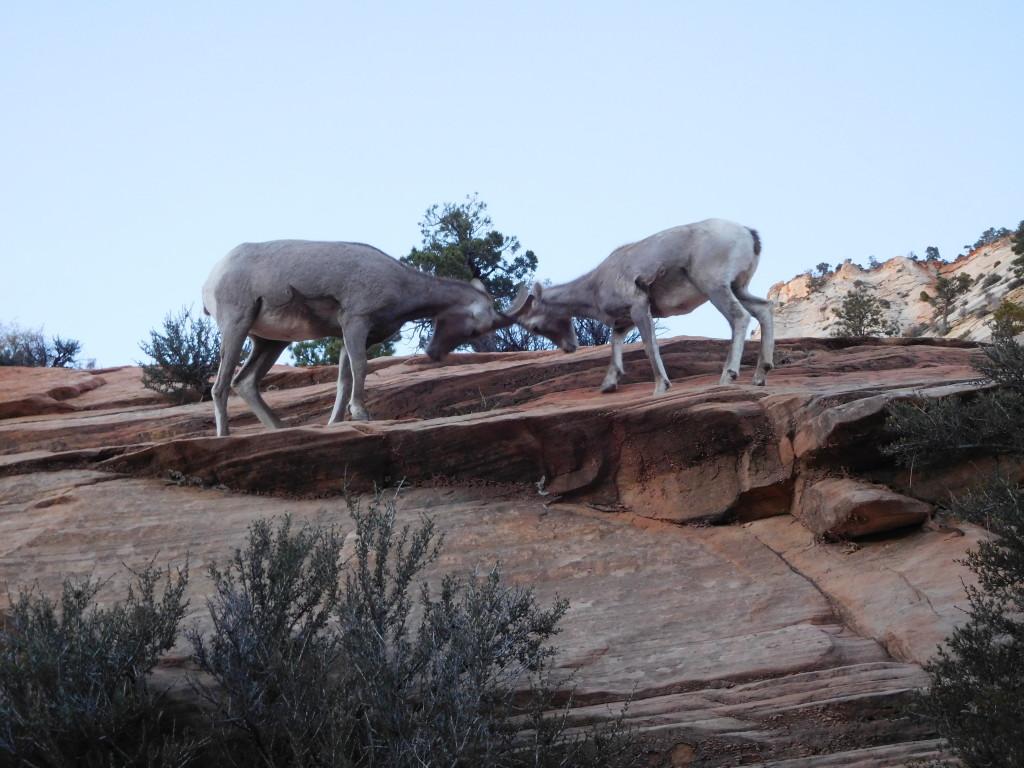 zion_national_park_6