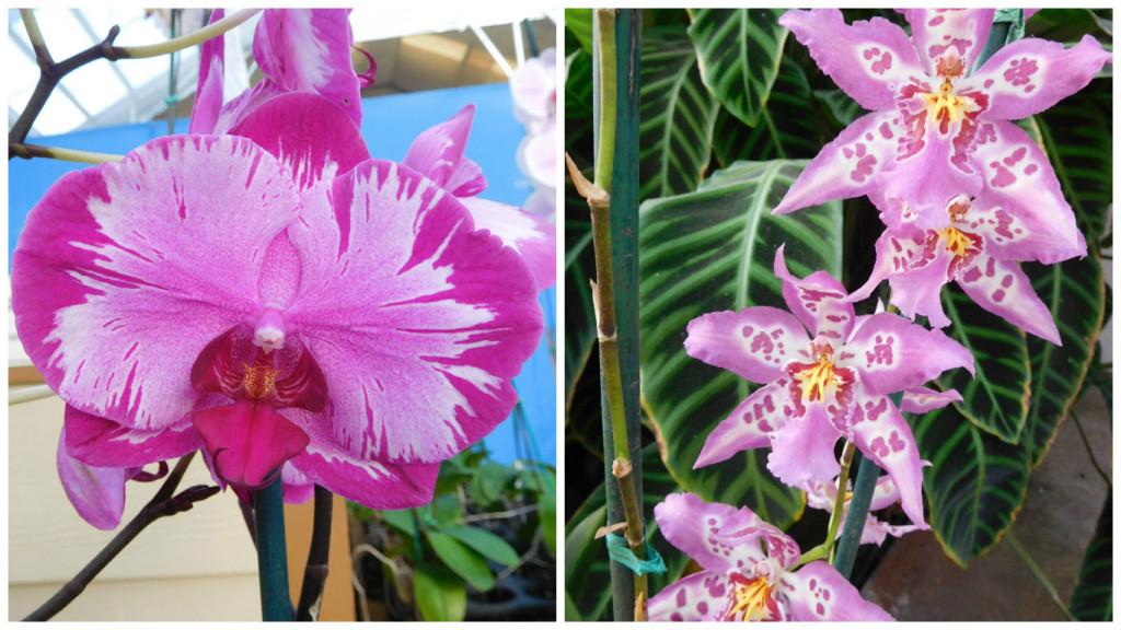 Akatsuka_Orchid_Gardens_9