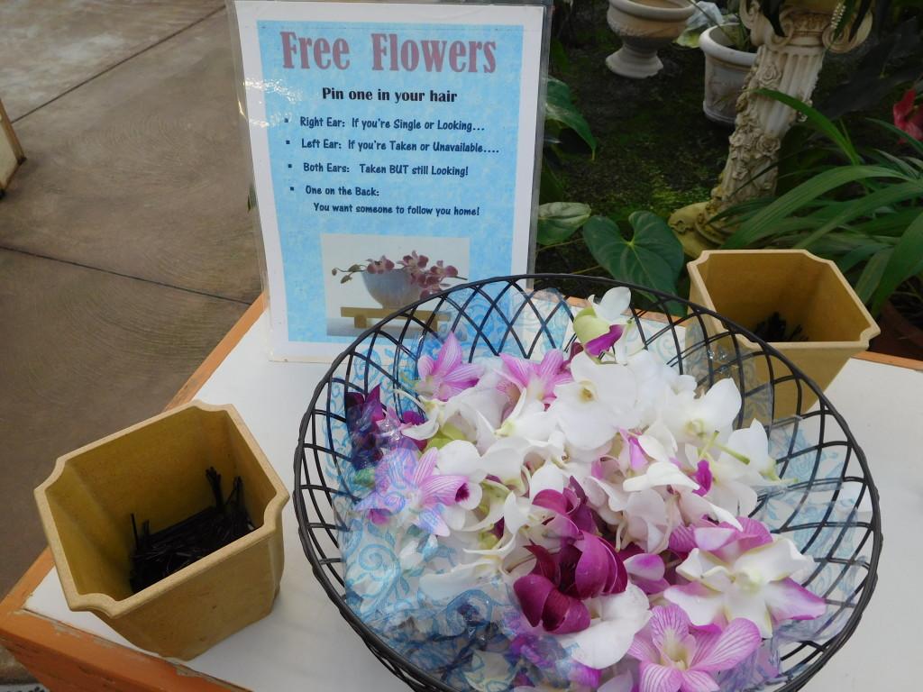 Akatsuka_Orchid_Gardens_big_island
