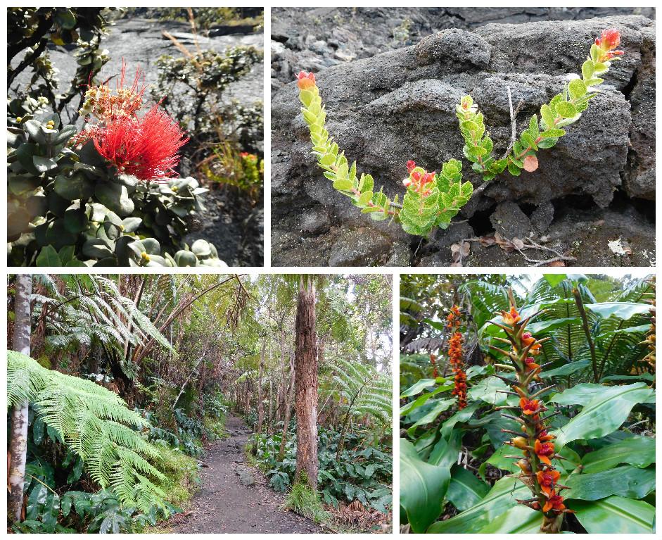 Kilauea_Iki_trail_volcanoes