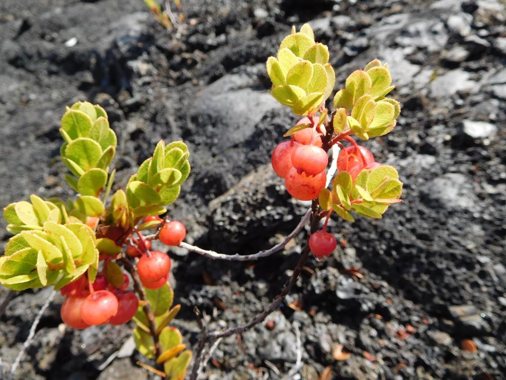 Puu_Huluhulu_trail_volcanoes_2