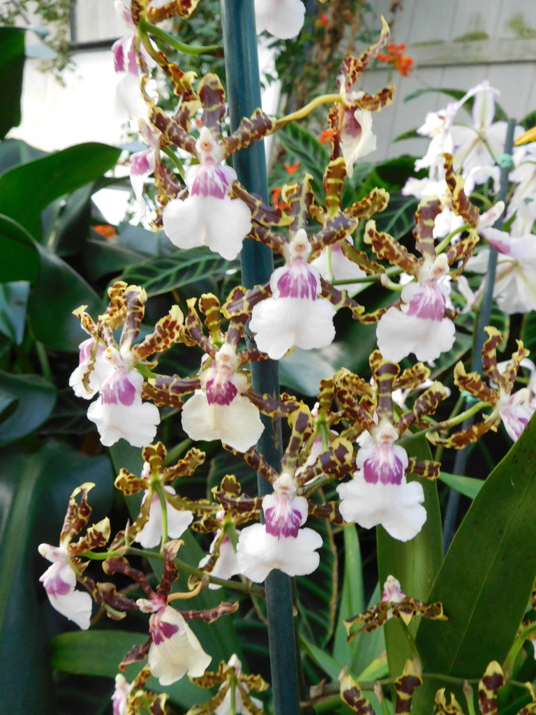 hawaii_orchid_garden