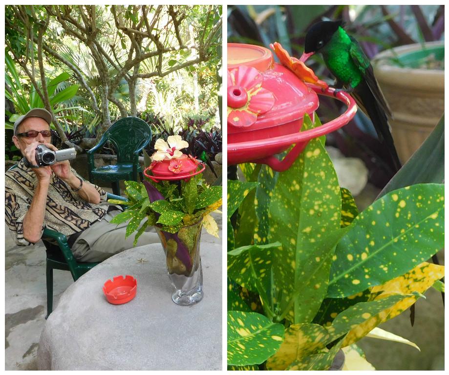 barneys_hummingbird_garden_negril