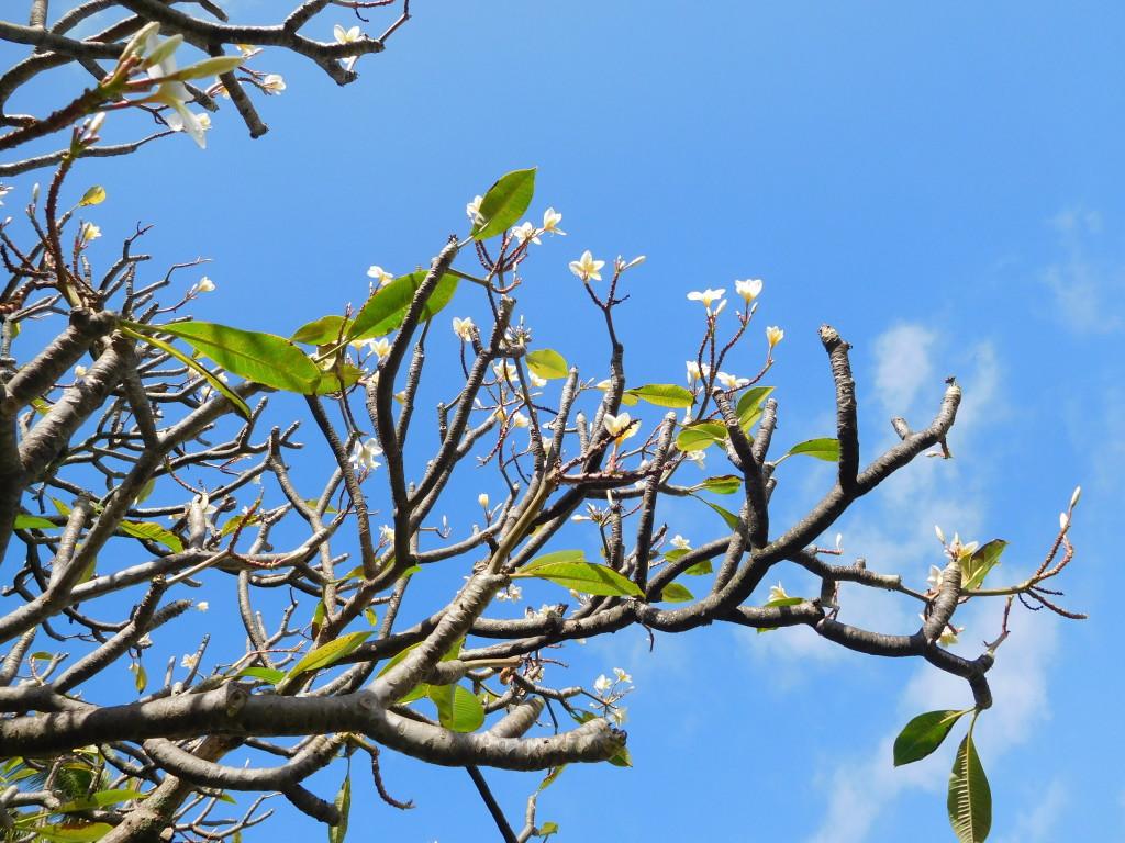 moir_gardens_kauai_1