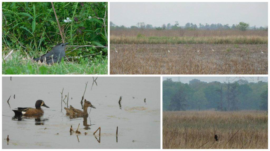 Savannah_National_Wildlife_Refuge_Hardeeville