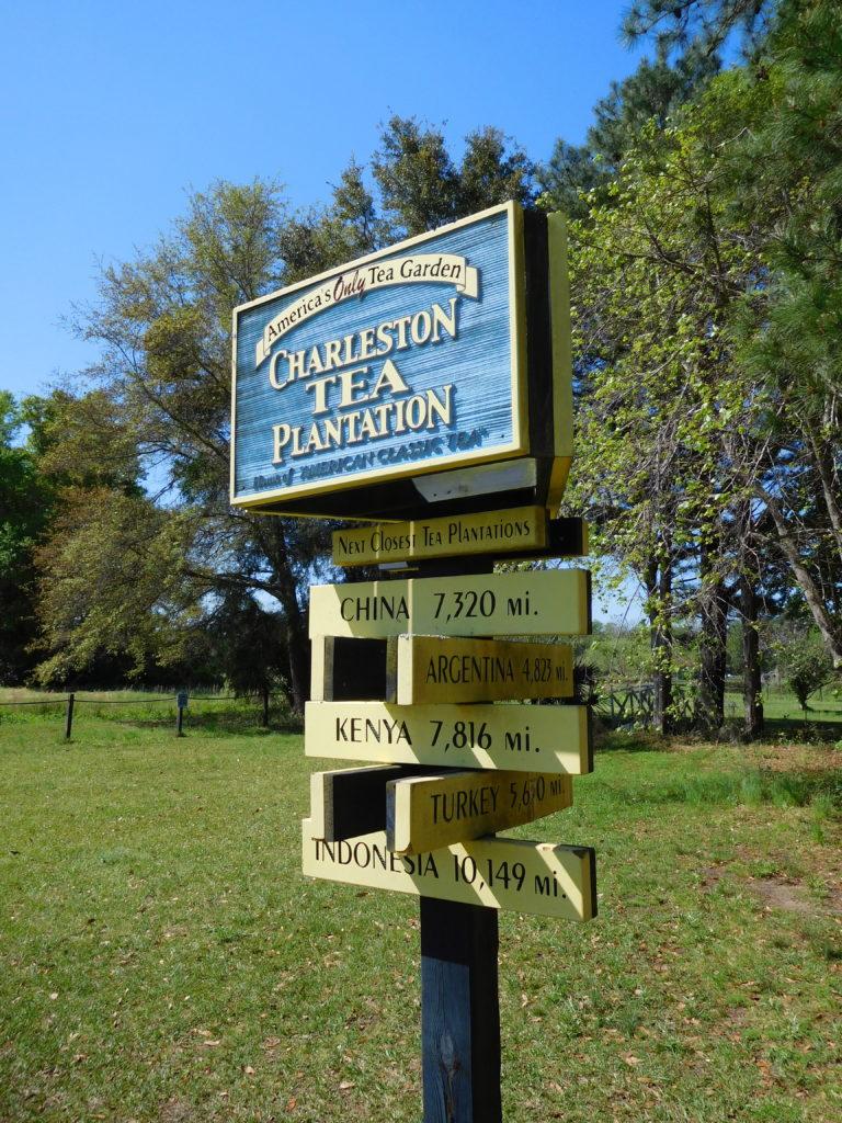 charleston_tea_plantation_2
