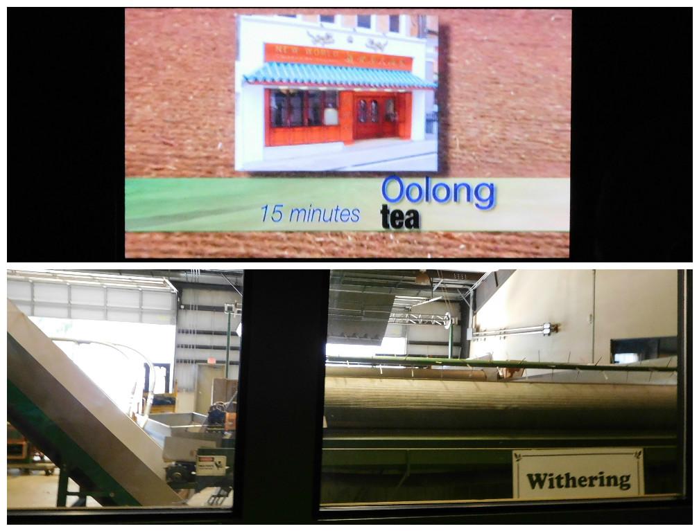 charleston_tea_plantation_factory_tour