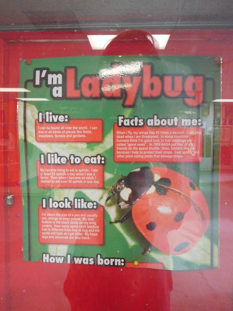 insectarium_philadelphia_99