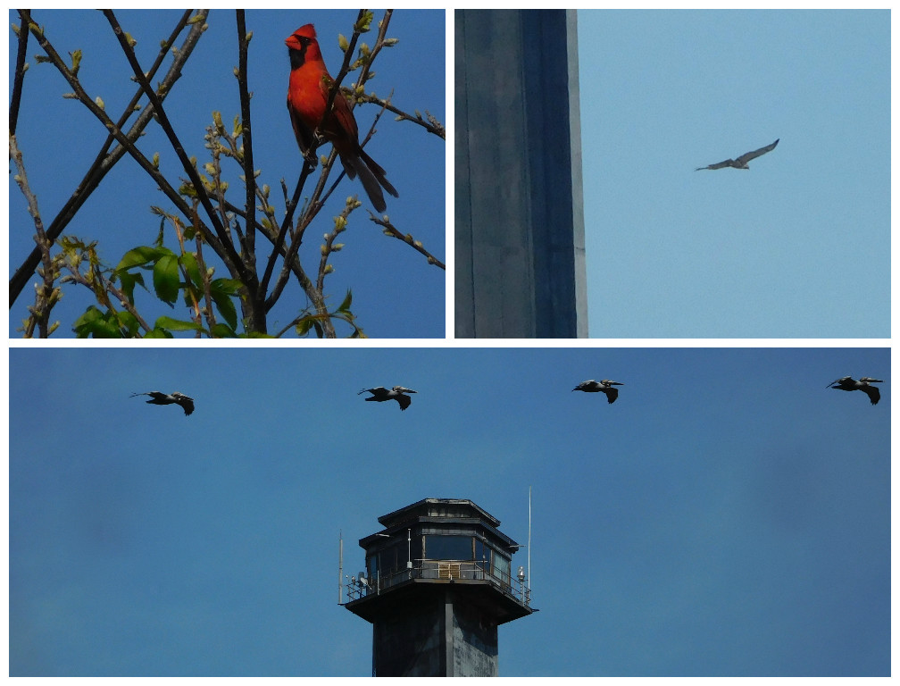 sullivans_island_birding