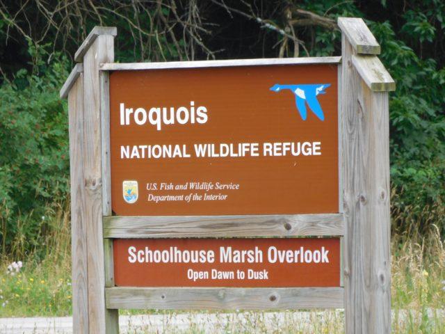 Iroquois_National_Wildlife_Refuge_new_york
