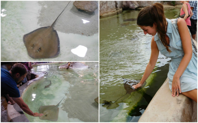 Long_Island_Aquarium
