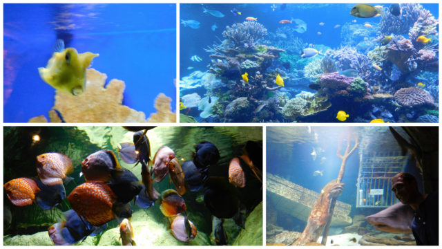 Long_Island_Aquarium_1