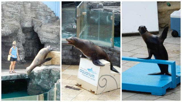 Long_Island_Aquarium_2