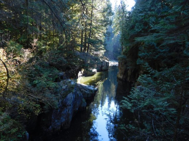 capilano_river_park_vancouver