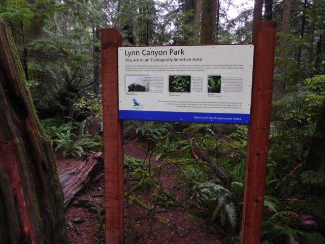 lynn_canyon_park_vancouver_5