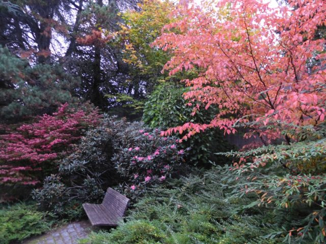 kubota_garden_seattle_4