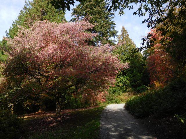 washington_park_arboretum_seattle_2